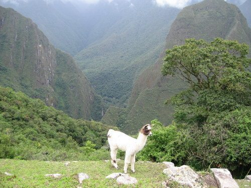 Peru - Inca Trail & Machu Picchu | Pat Falvey Adventure Travel