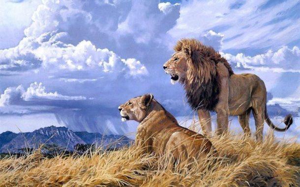 Kilimanjaro and lions